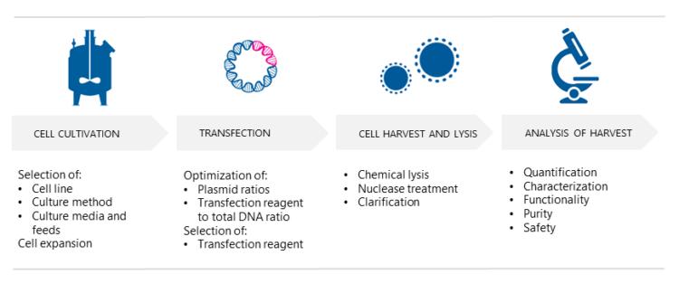 AAV production - Upstream Processes