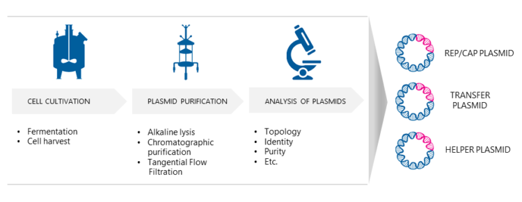 AAV Plasmid production.
